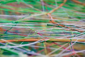 Spinnen erlaubt: Corporate Blogs erfolgreich im Unternehmen vernetzen